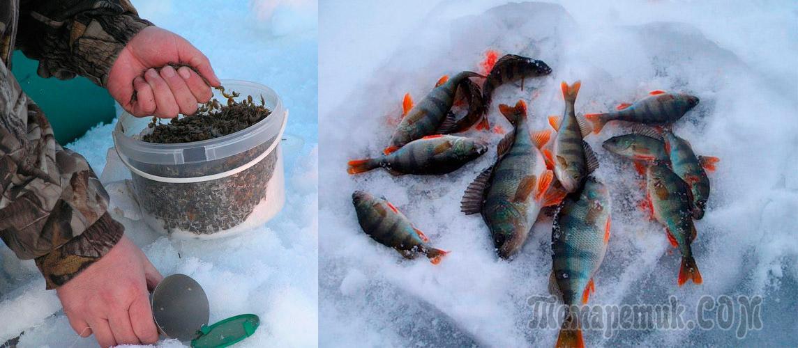 Прикормка для окуня зимой своими руками в домашних