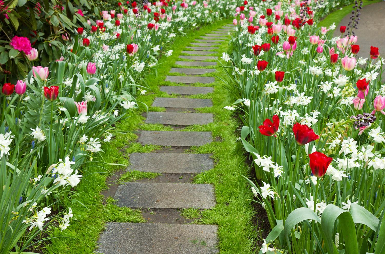 Цветы вдоль дорожек на даче фото