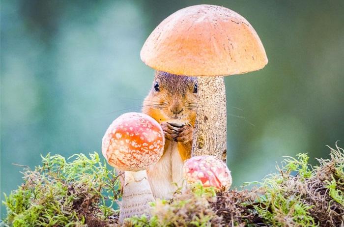 Перешептывается с грибами. Фотограф: Гирт Вегген (Geert Weggen).