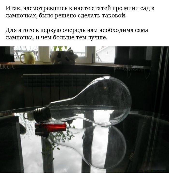 Делаем минисад внутри лампочки лампочка, минисад, рукоделие