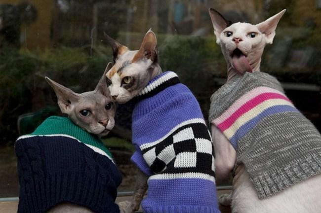 Коты в стильных кардиганах