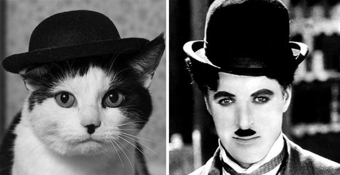 16.  животные, коты, юмор