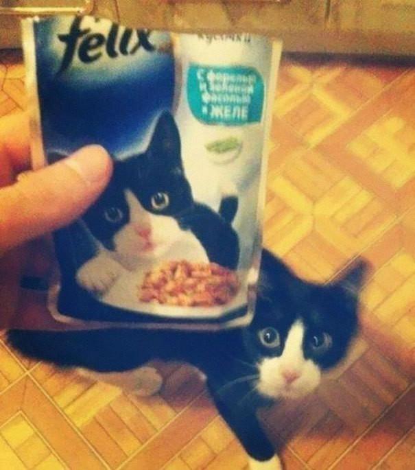 1.  животные, коты, юмор