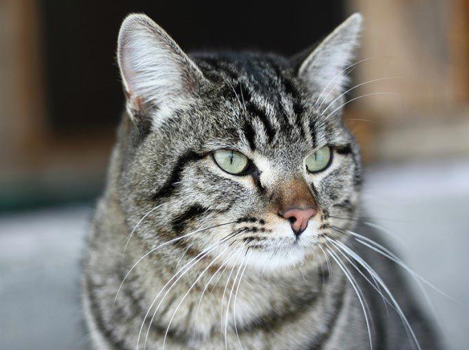 Кот Винни добро, животные, спасение