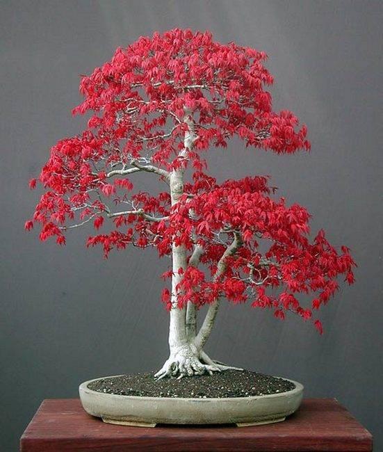 Мини-деревья своими руками 47