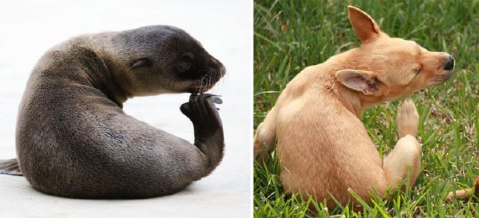 Удивительное сходство четвероногих и ластоногих животных.