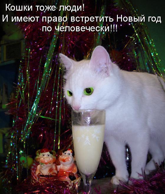 17. животные, коты, юмор