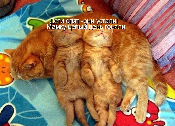 Все мужики... Коты кот, новое, прикол