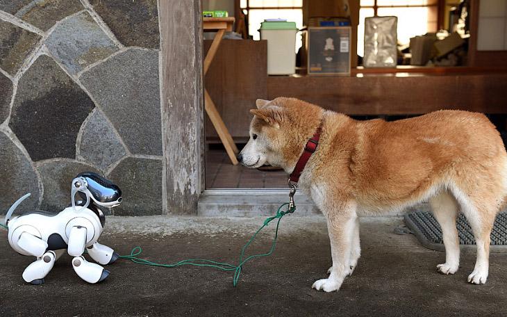 Собачье будущее