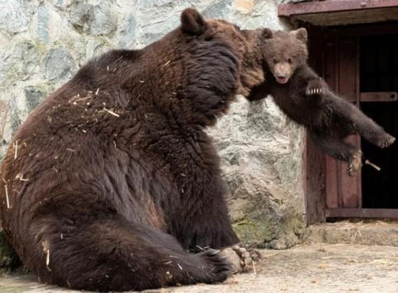 Строгая мама животные, прикол