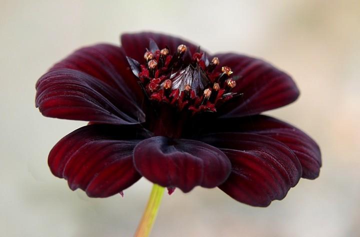 Фото шоколадного цветка