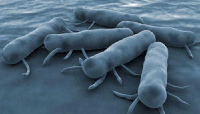 Бактерия сальмонелла.