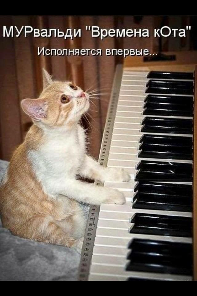 Кошачий пост животные, коты, юмор