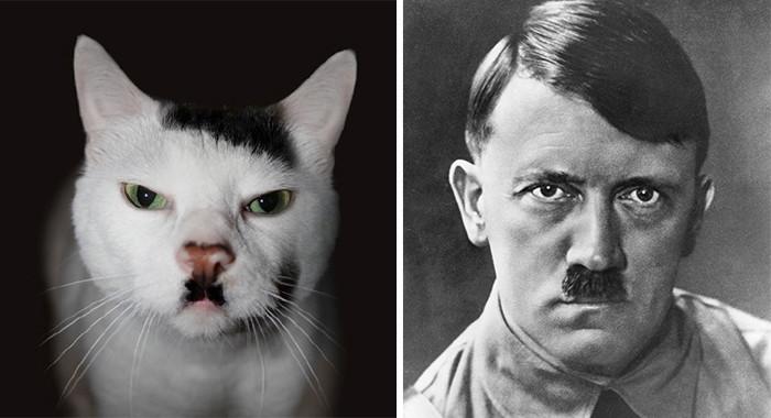 22.  животные, коты, юмор