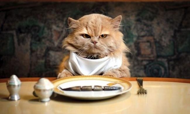 Чем нельзя кормить котов