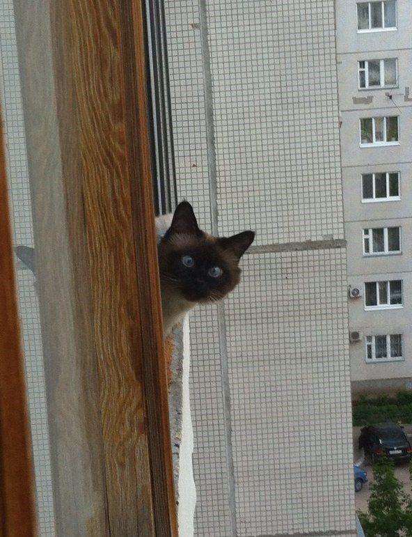 Эх  балкончики.мои балкончики...