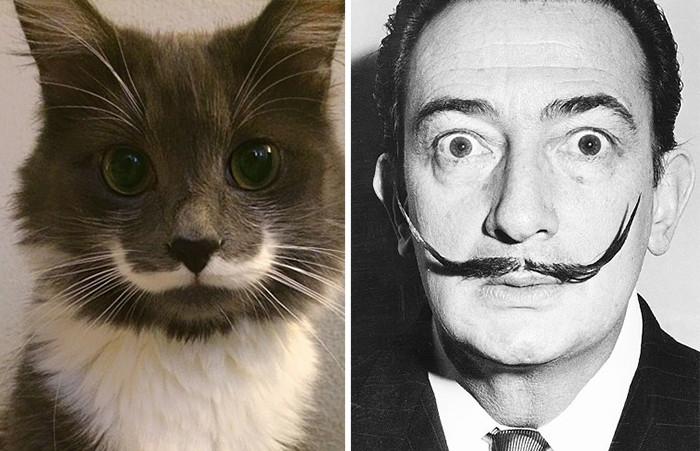 21.  животные, коты, юмор