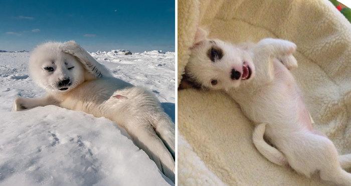 Собаки имеют много чего общего с тюленями.