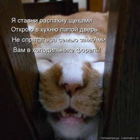 Кошкоматрицы.