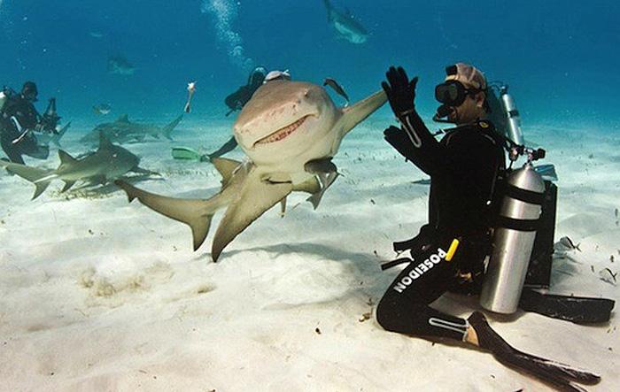 Дай пять: дайвер и акулий плавник.