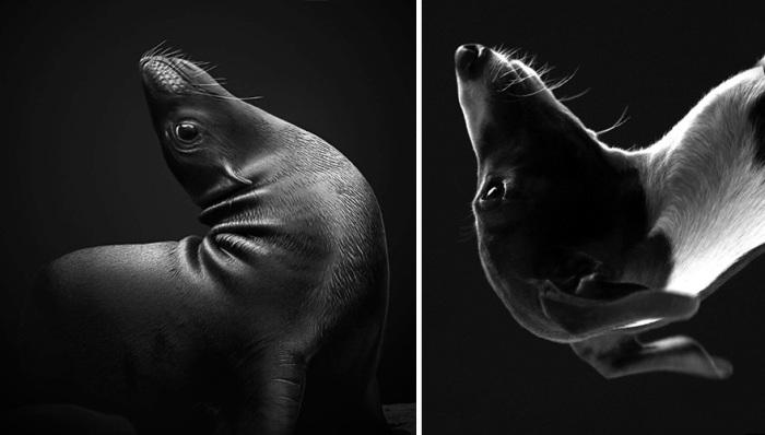 Животные в момент представлений.