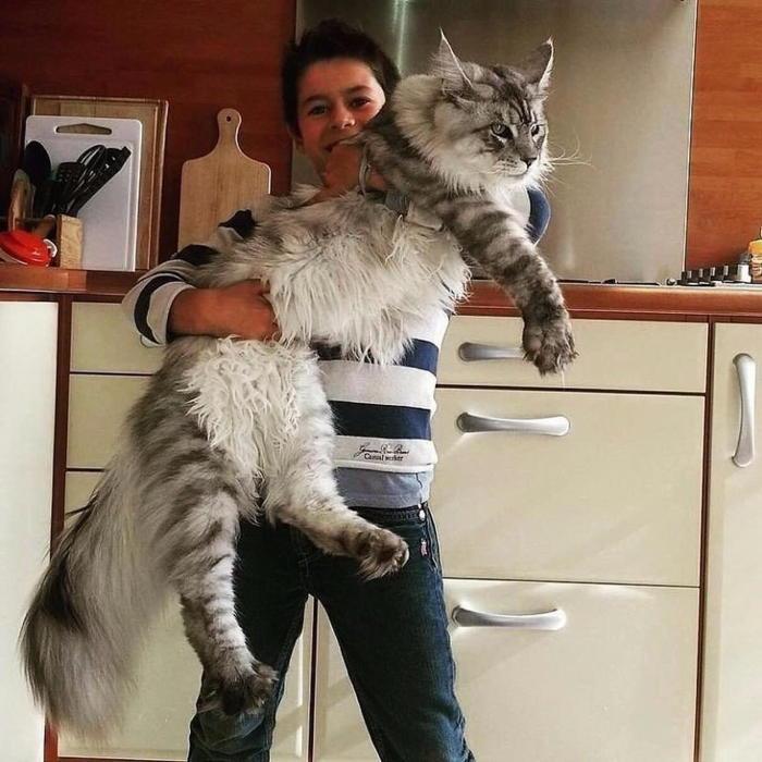 �������� ��������, ������� ����� �������� �� �����. � ����: storyfox.ru