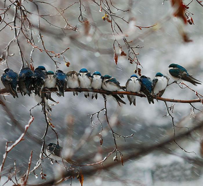 Птицы, мёрзнущие на ветке.