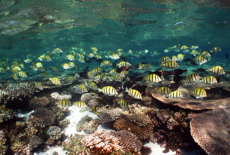 Нингалу австралия коралловый риф в