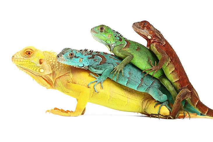 Рептилии: жизнь на белом