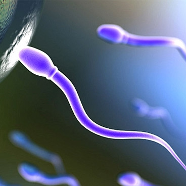 donorstvo-spermi-v-siktivkare