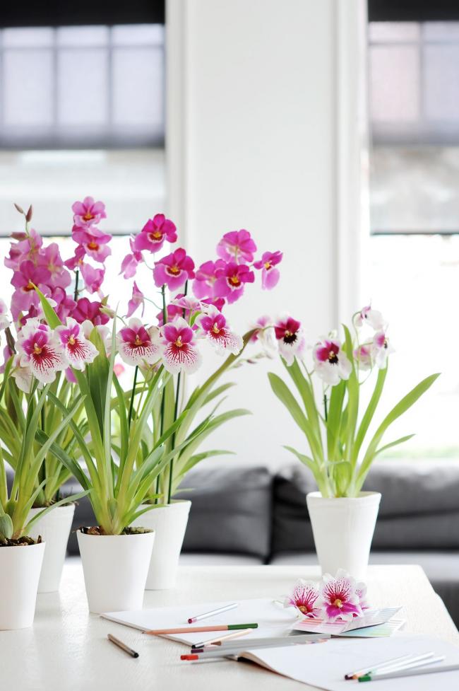 Цветок орхидея как ухаживать в домашних условиях пошагово