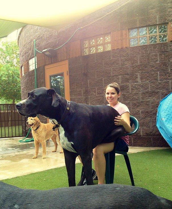 очень большая собака