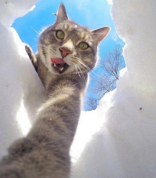 Кошачьи селфи (10 фото)