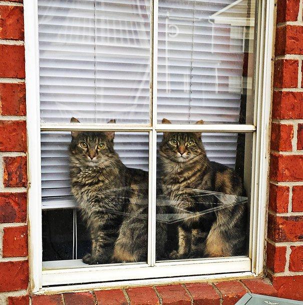 животные близнецы коты у окна