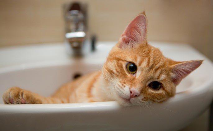 Кот Паддинг добро, животные, спасение
