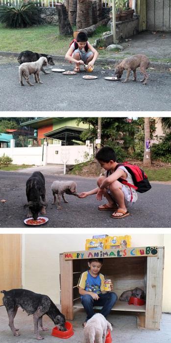 9-летний мальчик устроил в гараже приют для бродячих собак.