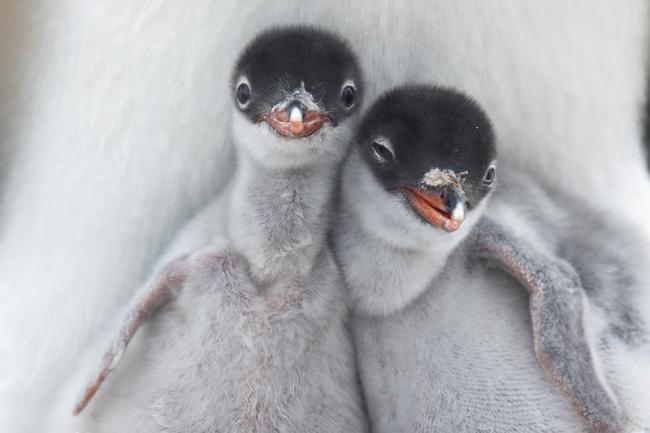 Братики и сестрички в мире животных