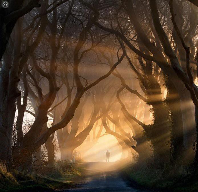 Тёмные буковые аллеи в Северной Ирландии красота мира, природа