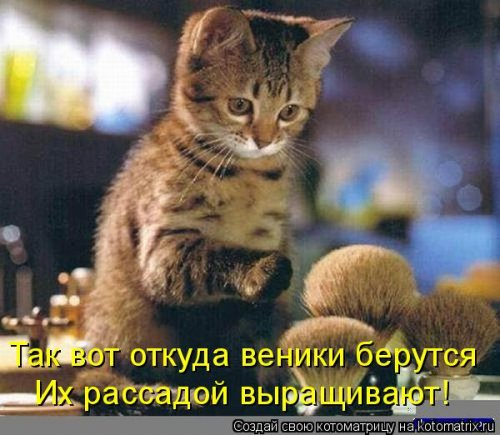 Новая котоматрица для хорошего настроения (28 фото)