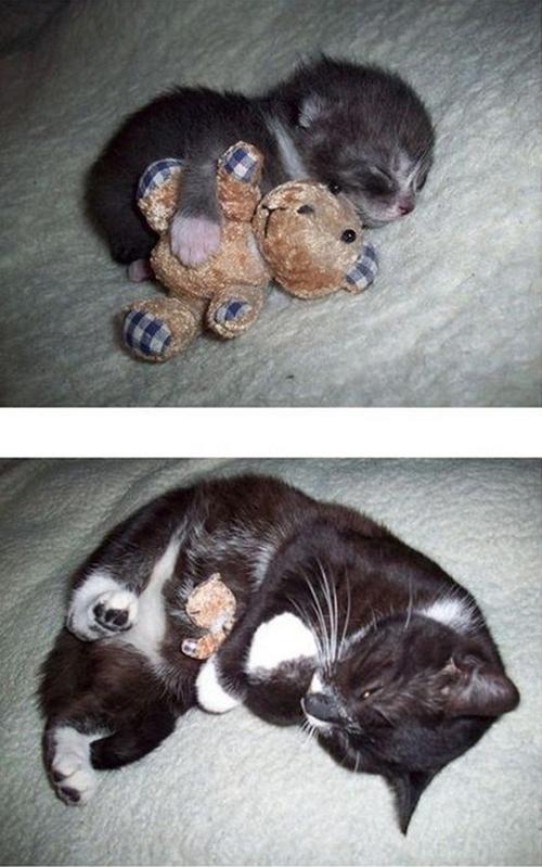 Кошки – тогда и сейчас животные, кошки, тогда и сейчас