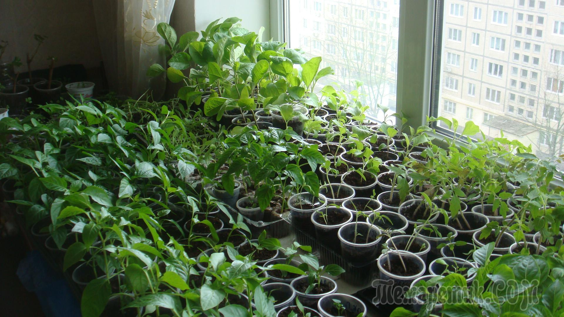 Выращивание на окне фото