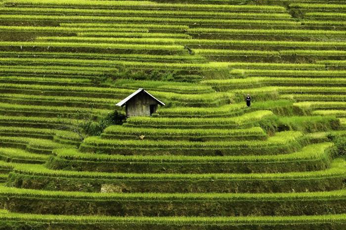 Террасы Му Кан Чай. Автор фото: Rehahn.