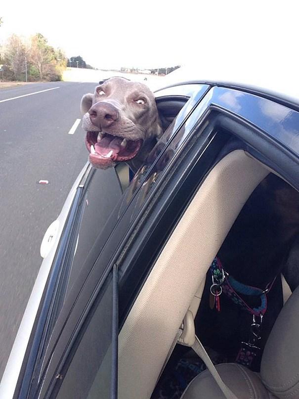 собака любит кататься