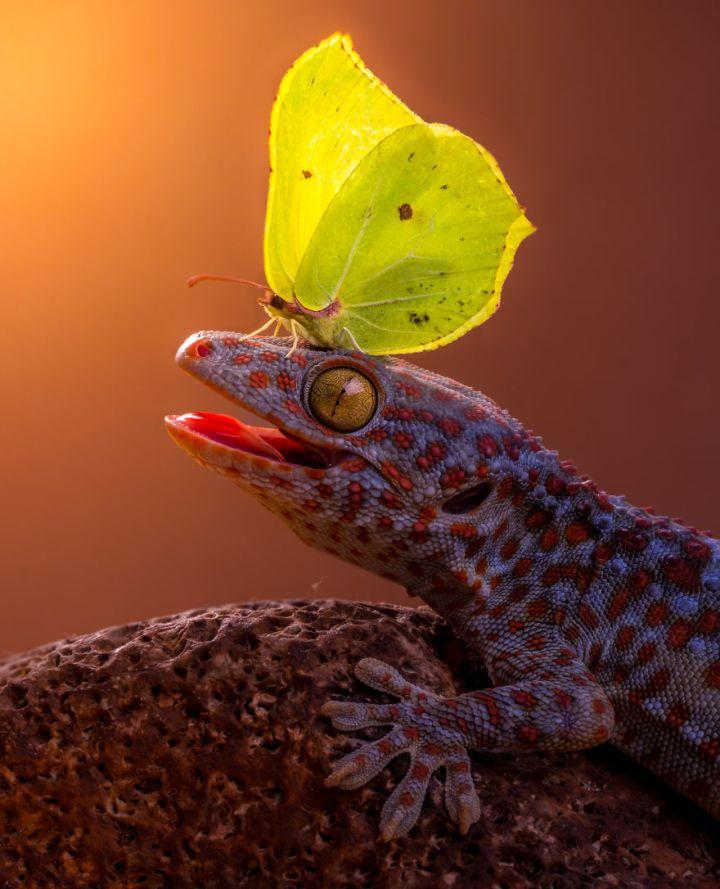 ящерица и бабочка
