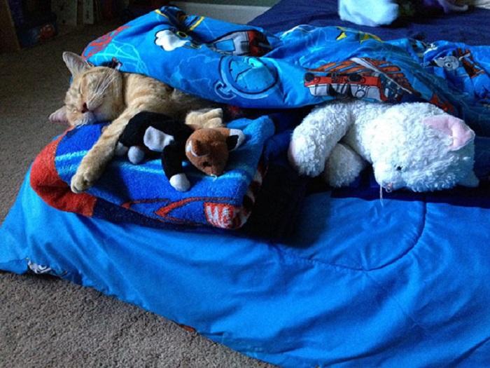 Мальчик приютил бездомного кота и каждый вечер берёт его с собой спать, чтобы быть уверенным, что коту тепло и комфортно.
