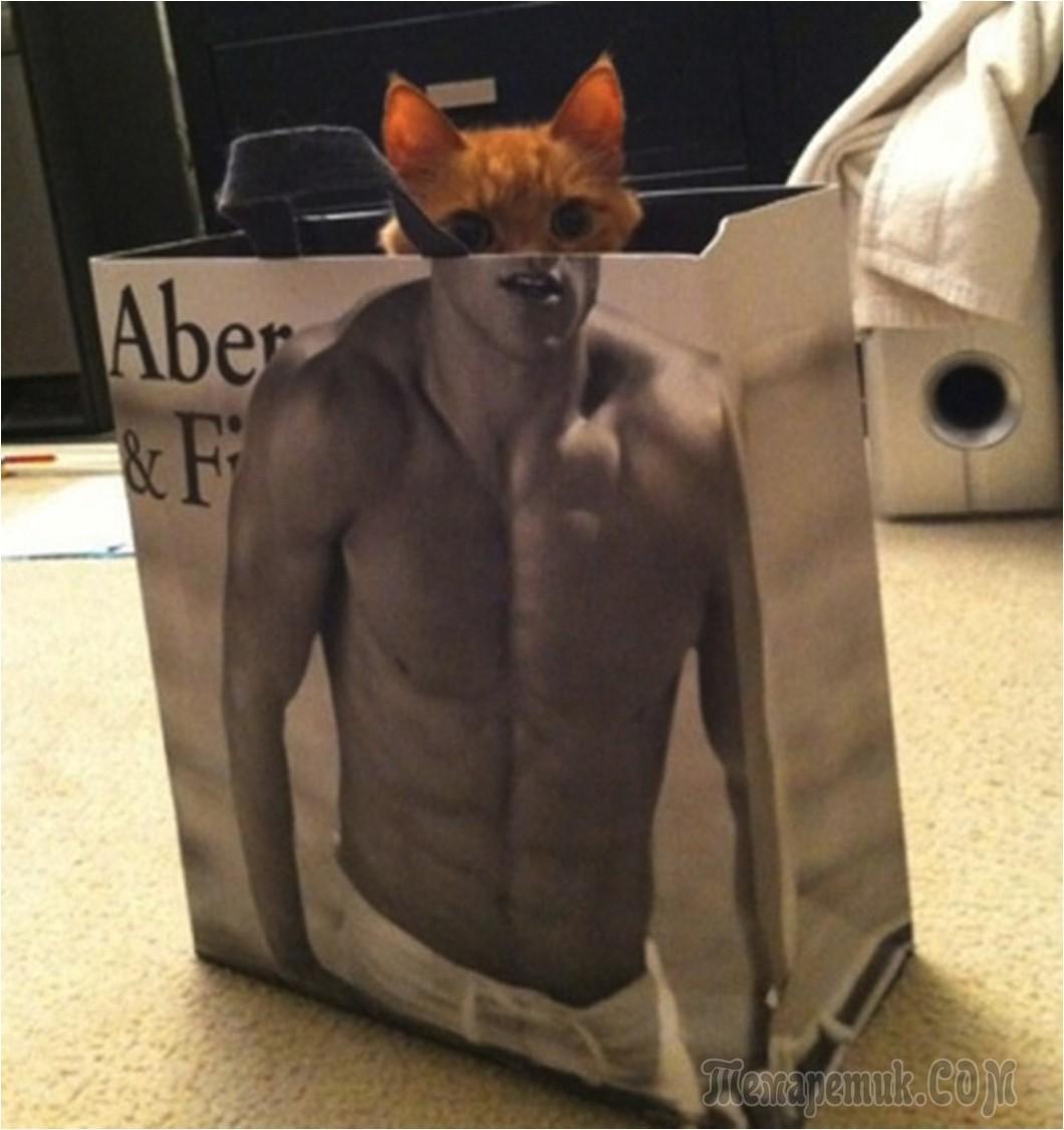 Как сделать смешное кота