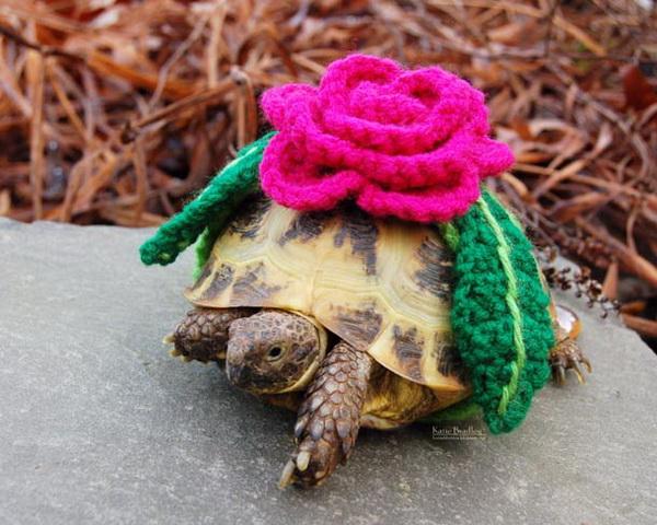 Черепаха с розой на спине.