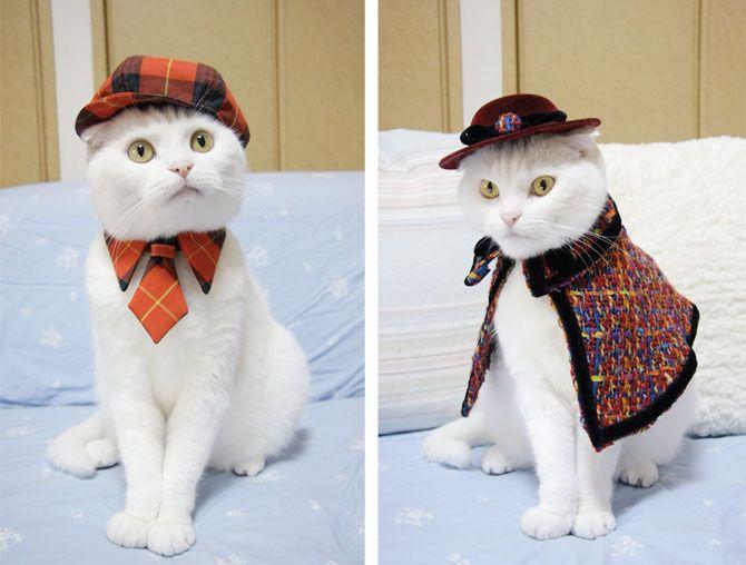 Кошачья мода по-японски