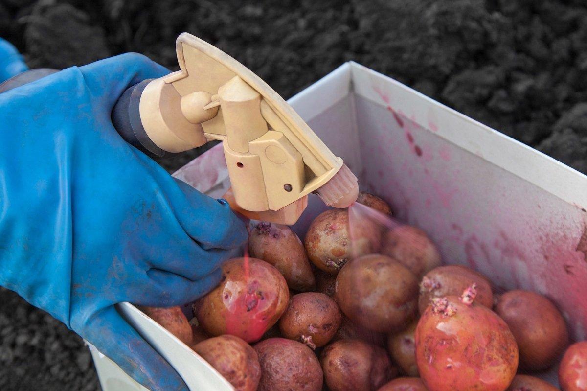 Картофель выращивание и болезни 89