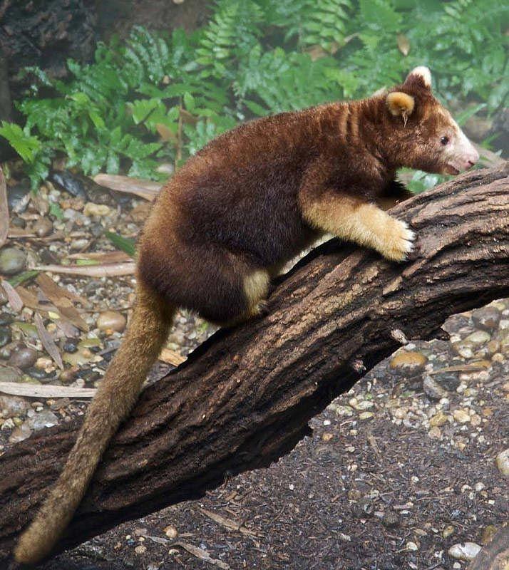 необычные вымирающие животные, животные на грани вымирания, животные под угрозой вымирания